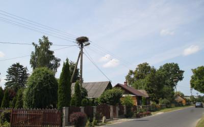Stary Bubel z licznymi gniazdami bocianów białych