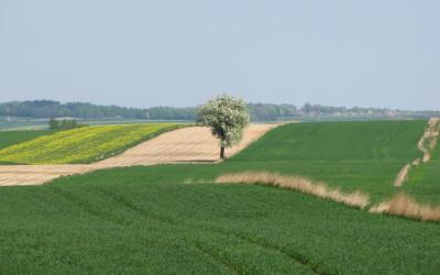 Krajobraz rolniczy w okolicach Walentynowa