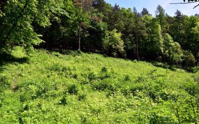 Płat murawy kserotermicznej w rez. Las Królewski