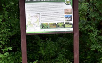 Tablica informacyjna na ścieżce w Lesie Królewskim