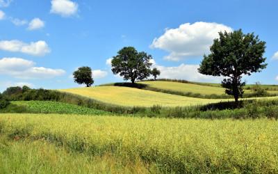 Falisty krajobraz Działów Grabowieckich