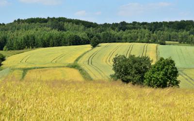 Krajobraz rolniczy Skierbieszowskiego Parku Krajobrazowego
