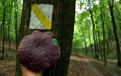 Taaaaakie grzyby można znaleźć na ścieżce edukacyjnej Cieszynianka-Kamienny Wąwóz