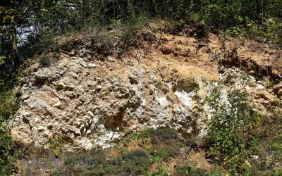 Odsłonięcie skał wapiennych w Kamiennym Wąwozie