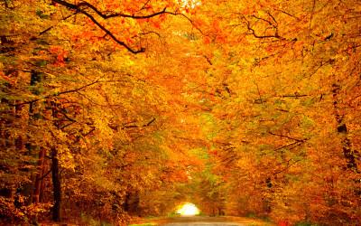 Jesień w Kozłowieckim Parku Krajobrazowym, fot. Michał Zieliński