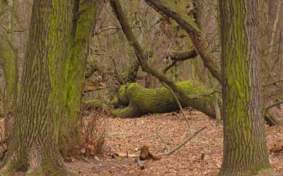 Rezerwat Siedliszcze w lasach Strzeleckich, fot. Krzysztof Wojciechowski