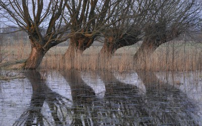 I miejsce - Wierzby (Rezerwat Bagno Serebryskie), Fot. Dariusz Kostecki ©