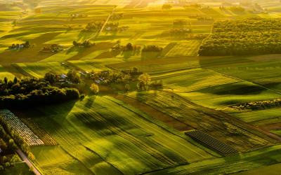 III miejsce ex aequo - Świetliste pola (Kazimierski Park Krajobrazowy), Fot. Ryszard Domański ©