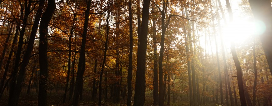 Jesień w Lasach Kozłowieckich