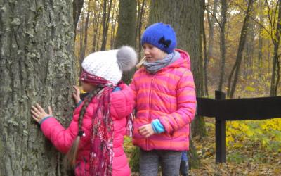 badamy drzewo