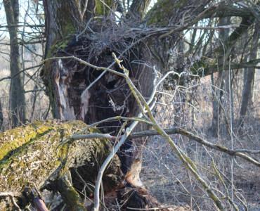O bobrze w pigułce