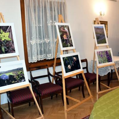 """Wystawa """"Kwiaty Gór"""" w Ogrodzie Botanicznym UMCS"""