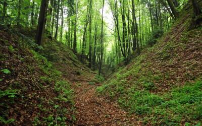 Wąwóz lessowy w Szczebrzeszyńskim Parku Krajobrazowym (fot. M. Grabek)