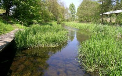 Źródło w Hutkach - pomnik przyrody fot. archiwum ZLPK