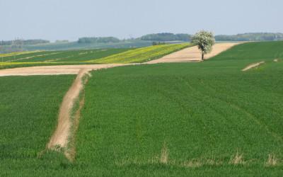 Krajobraz wiosenny Krzczonowskiego PK fot. K. Wojciechowski (1)