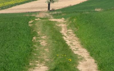 Krajobraz wiosenny Krzczonowskiego PK fot. K. Wojciechowski (2)