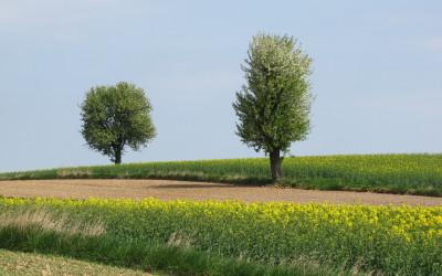 Krajobraz wiosenny Krzczonowskiego PK fot. K. Wojciechowski (3)