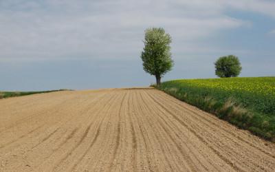 Krajobraz wiosenny Krzczonowskiego PK fot. K. Wojciechowski (4)