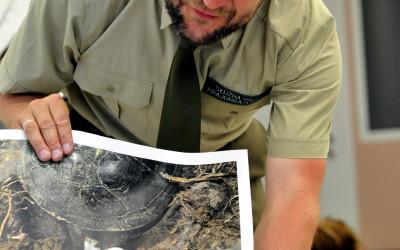 tak żółwica składa jajka