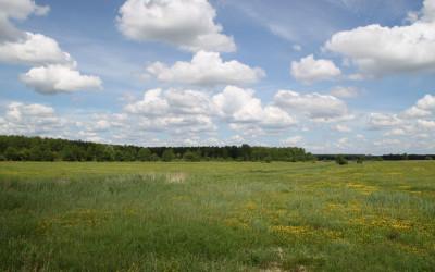 Nadbużańska łąka