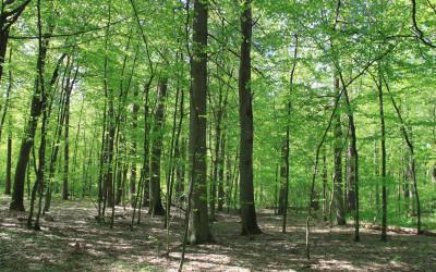 Widok na las liściasty