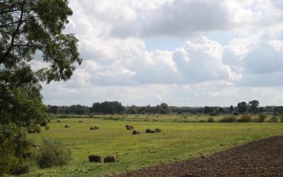 Widok na łąki w dolinie Krzny