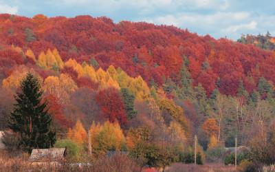 Скєрбєшовскій ландшафтний парк – наймолодший і найбільший в Любельському воєводстві. фот. Кшиштоф Войцеховський