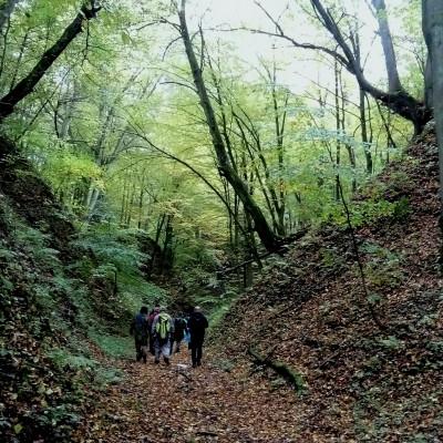 Gdzie jesienią skrzypi skrzyp zimowy … czyli rajd pieszy po wąwozach Szczebrzeszyńskiego PK