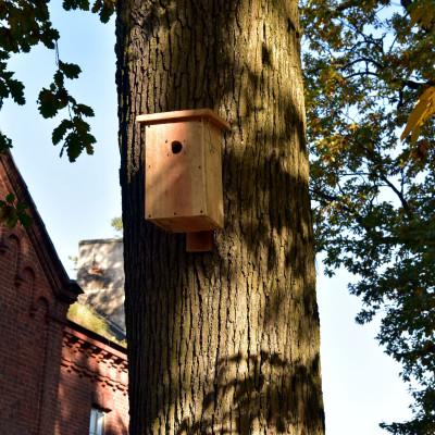Czynna ochrona przyrody w Sobieszynie