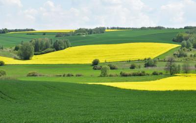 Majowy krajobraz okolic Iłowca, K. Wojciechowski