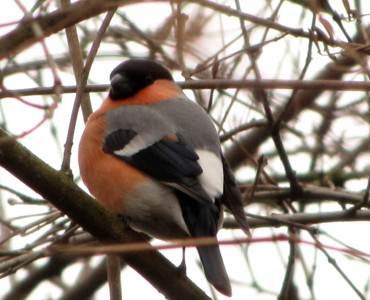 Jak dokarmiać ptaki zimą?