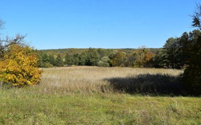 Dawne stawy w Stryjowie to dziś połacie łąk i trzcinowisk