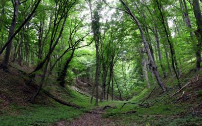 Debra w Lesie Orłowskim