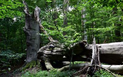 W Lesie Orłowskim