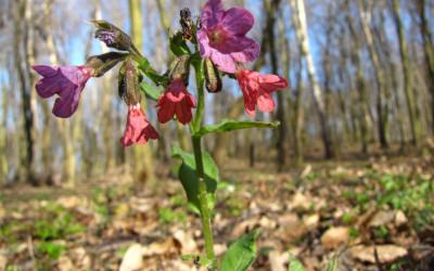 kwiat biodunki