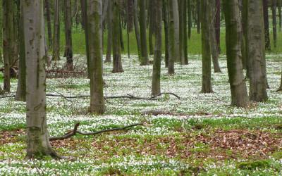 nie było śniegu zimą, to jest wiosną