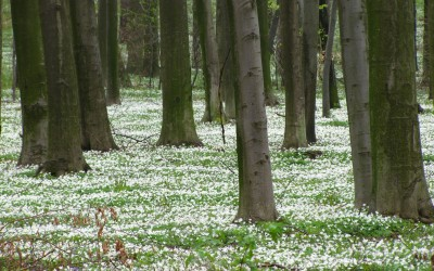 wiosenny śnieg