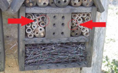 czymy samotne pszczoły ; )