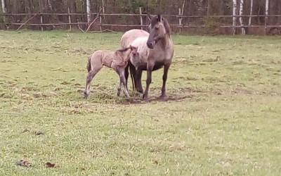 Mama z córką na pastwisku