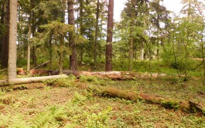Na szczycie Kościółka widoczne są pozostałości wałów ziemnych grodziska