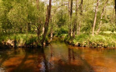 Ujście rzeki Jeleń do Tanwi