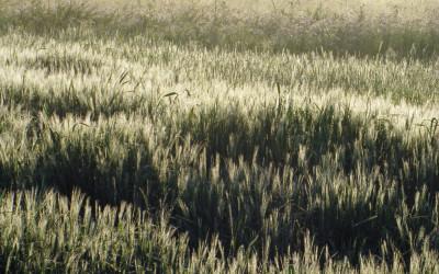 Chełmski Park Krajobrazowy o świcie, fot. P. Bakun