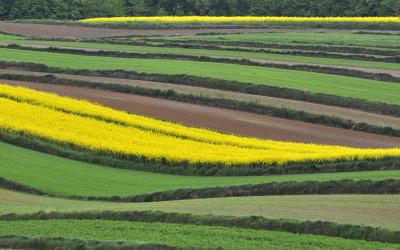 Krajobraz rolniczy, fot. D. Kostecki
