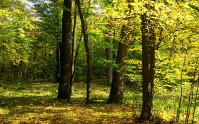 Las grądowy w Rezerwacie Bachus, fot. R. Kaczmarski