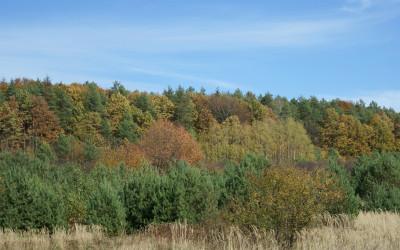 Jesień w Szczebrzeszyńskim Parku Krajobrazowym (1), fot. Archiwum ZLPK OZ w Zamościu