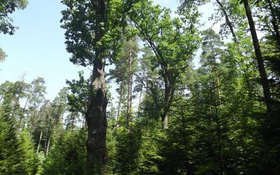 Rezerwat przyrody Jalinka (2), fot. Archiwum ZLPK OZ w Zamościu