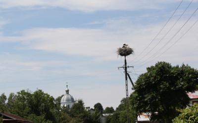 Siedliska, fot. Archiwum ZLPK OZ w Zamościu
