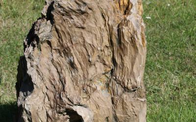 Skamieniałe drzewo, fot. Archiwum ZLPK OZ w Zamościu