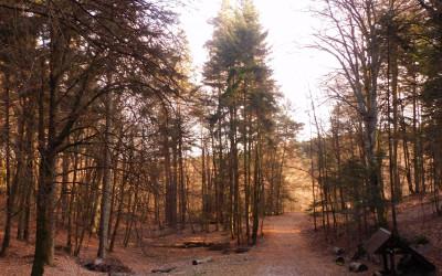 Dolina św. Rocha, fot. K.Kowalczuk
