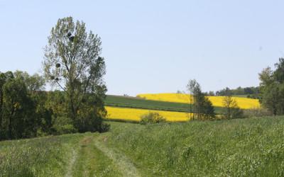 Krajobraz Krasnobrodzkiego parku Krajobrazowego, fot. K. Kowalczuk (1)